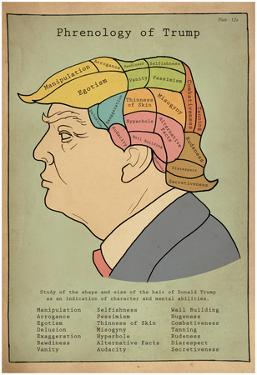 Phrenology Of Trump