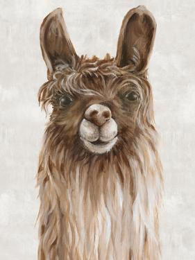 Suri Alpaca I by PI Creative Art