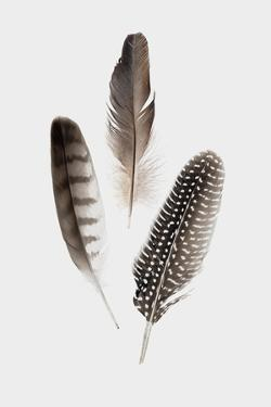 Feathers I by PI Studio