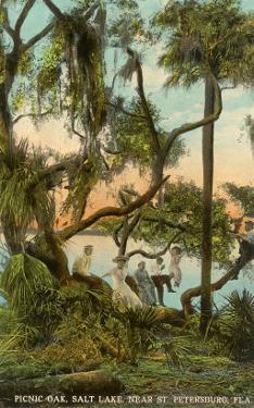 Picnic Oak, St. Petersburg, Florida