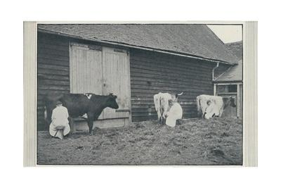 'Milking Cows', 1910