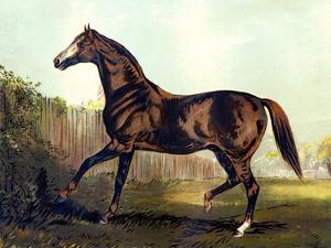 "Horse Chromolithograph ""Thoroughbred Sire Blair Athol,"" 1867 by Piddix"