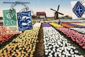 Tulips and Windmills, Dutch Vintage Postcard Collage by Piddix