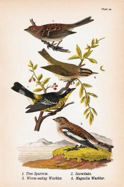Vintage Birds: Sparrows, Snowflakes and Warblers, Plate 94 by Piddix