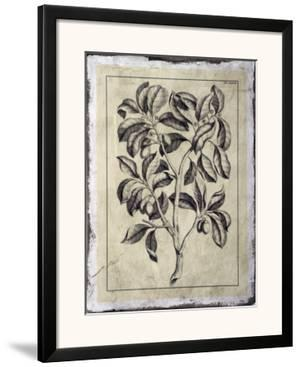 Embellished Antique Foliage I by Pierre-Joseph Buchoz