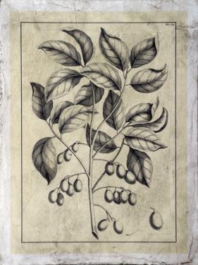 Embellished Antique Foliage V by Pierre-Joseph Buchoz