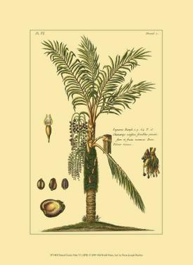 Printed Exotic Palm VI by Pierre-Joseph Buchoz