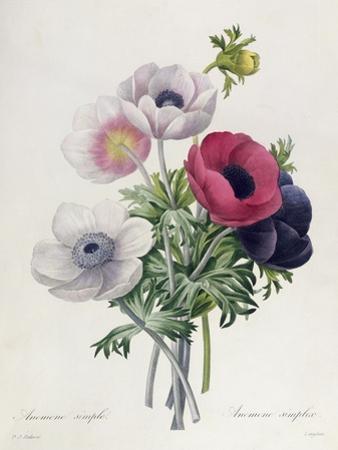 """Anemone: Simple, from """"Les Choix Des Plus Belles Fleurs"""""""