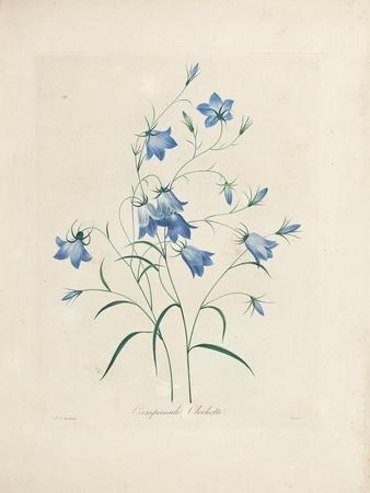 Bluebells, from 'Choix Des Plus Belles Fleurs Et Des Plus Beaux Fruits', 1827-33