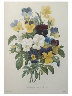 Bouquet of Pansies by Pierre-Joseph Redoute