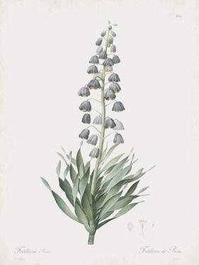 Fritillaria Persica by Pierre Joseph Redoute