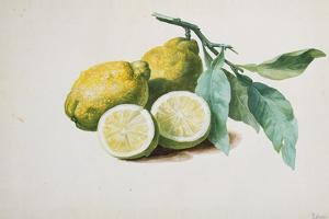 Lemons, 1840 by Pierre-Joseph Redouté