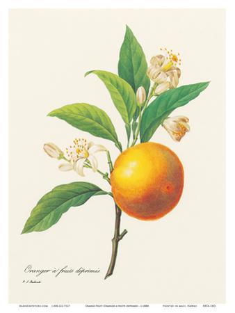 Orange Fruit - From the Book: Choix des Plus Belles Fleurs