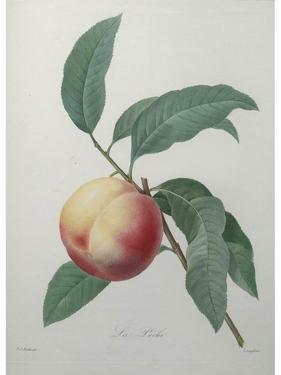 Peach by Pierre-Joseph Redoute
