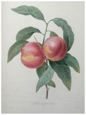 Peaches by Pierre-Joseph Redoute