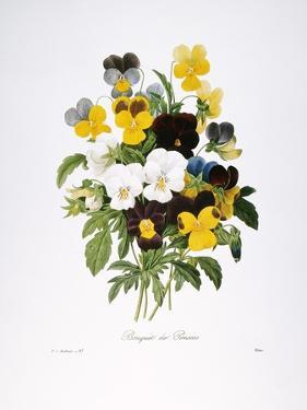 Redoute: Pansy, 1833 by Pierre-Joseph Redouté