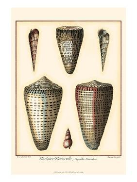 Redoute Shells I by Pierre-Joseph Redouté