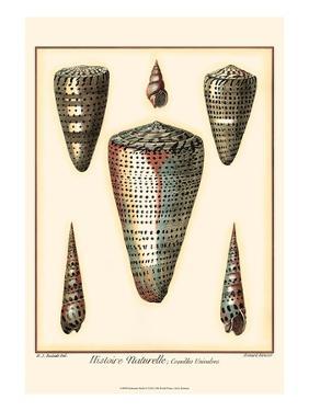 Redoute Shells II by Pierre-Joseph Redouté