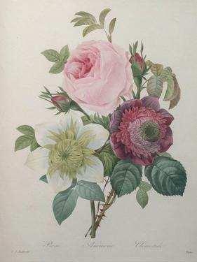Rose, Anemone and Clematis by Pierre-Joseph Redoute