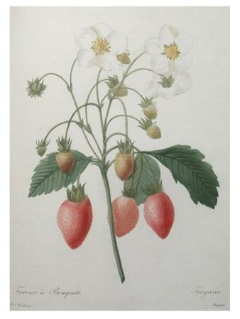 Strawberry Bouquet by Pierre-Joseph Redoute