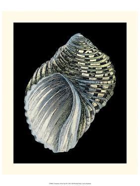Treasures of the Sea III by Pierre-Joseph Redouté