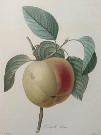 White Apple by Pierre-Joseph Redoute