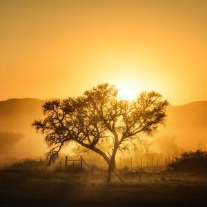 Golden Sunrise by Piet Flour