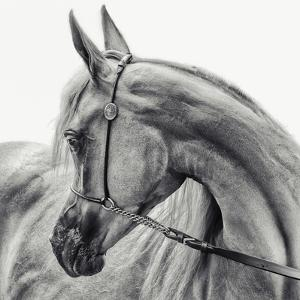 The Arabian Horse by Piet Flour