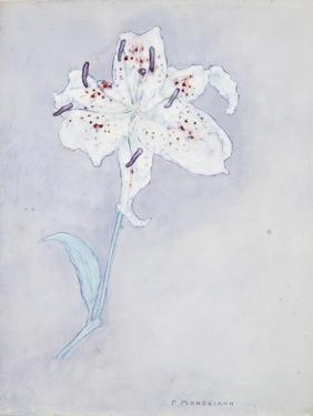 Lily, C.1920-25 by Piet Mondrian
