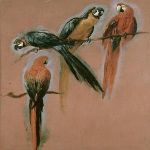 Etude de quatre perroquets by Pieter Boel