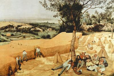 Pieter Bruegel The Grain Harvest