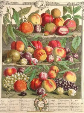 August, from 'Twelve Months of Fruits' by Pieter Casteels