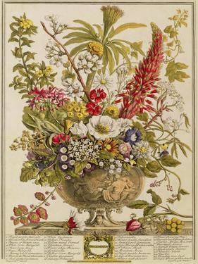 December, from 'twelve Months of Flowers' by Robert Furber (C.1674-1756) Engraved by Henry Fletcher by Pieter Casteels
