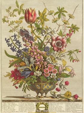 February, from 'Twelve Months of Flowers' by Robert Furber (C.1674-1756) Engraved by Henry Fletcher by Pieter Casteels