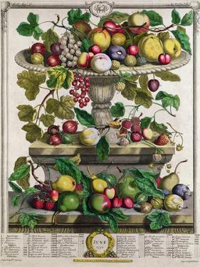 June, from 'Twelve Months of Fruits' by Pieter Casteels
