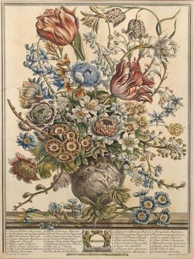 March, from 'Twelve Months of Flowers' by Robert Furber (C.1674-1756) Engraved by Henry Fletcher by Pieter Casteels