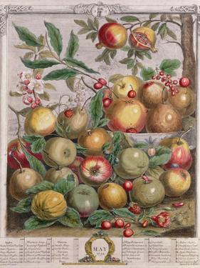 May, from 'Twelve Months of Fruits' by Pieter Casteels