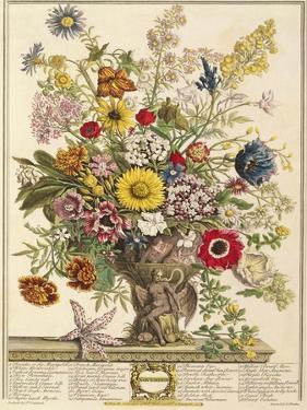 November, from 'twelve Months of Flowers' by Robert Furber (C.1674-1756) Engraved by Henry Fletcher by Pieter Casteels
