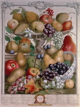 November, from 'Twelve Months of Fruits' by Pieter Casteels