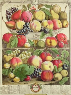 "September, from ""Twelve Months of Fruits"", by Robert Furber, 1732 by Pieter Casteels"