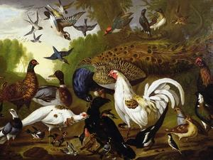 The Fable of the Raven with a Peacock, Cockerel, Woodpecker, Jay, Woodcock, and Magpie by Pieter Casteels