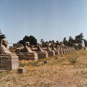 The Avenue of the Sphinx at the Temple of Luxor by Pietro Ronchetti