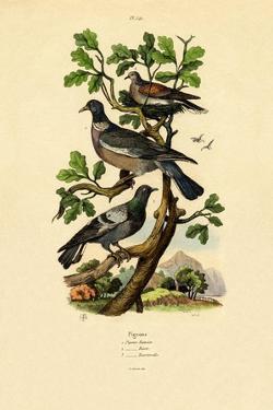 Pigeons, 1833-39