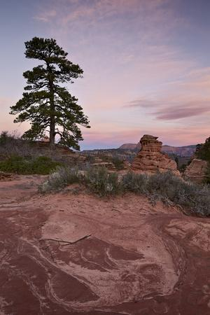 https://imgc.allpostersimages.com/img/posters/pine-tree-and-sandstone-at-dawn-with-pink-clouds_u-L-PWFET70.jpg?p=0
