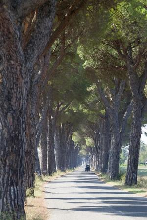 https://imgc.allpostersimages.com/img/posters/pine-tree-lined-road-with-small-piaggio-three-wheeled-van-travelling-along-it_u-L-PQ8OWN0.jpg?artPerspective=n