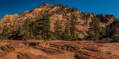 Pine trees and sandstone cliffs, Zion National Park, Utah, USA