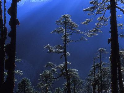 https://imgc.allpostersimages.com/img/posters/pine-trees-glisten-in-the-early-morning-sunlight-in-the-remote-hingku-valley-near-mount-everest_u-L-P91VKF0.jpg?artPerspective=n