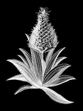 Pineapple Noir I
