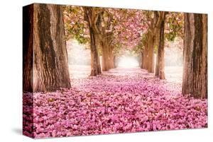 Pink Cherry Blossom Tunnel
