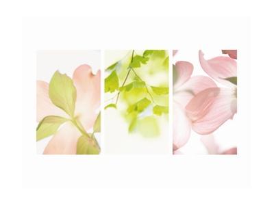 Pink Dogwood Triptych